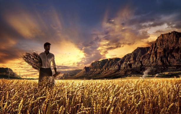 goldenharvest
